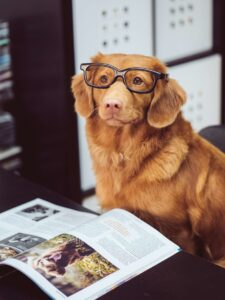 dog wearing glasses reading a magazine